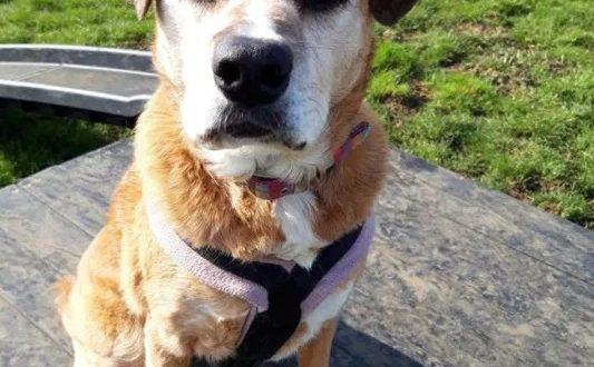 Perrita que ha pasado 11 años en perreras está desesperada por que una familia la lleve a casa